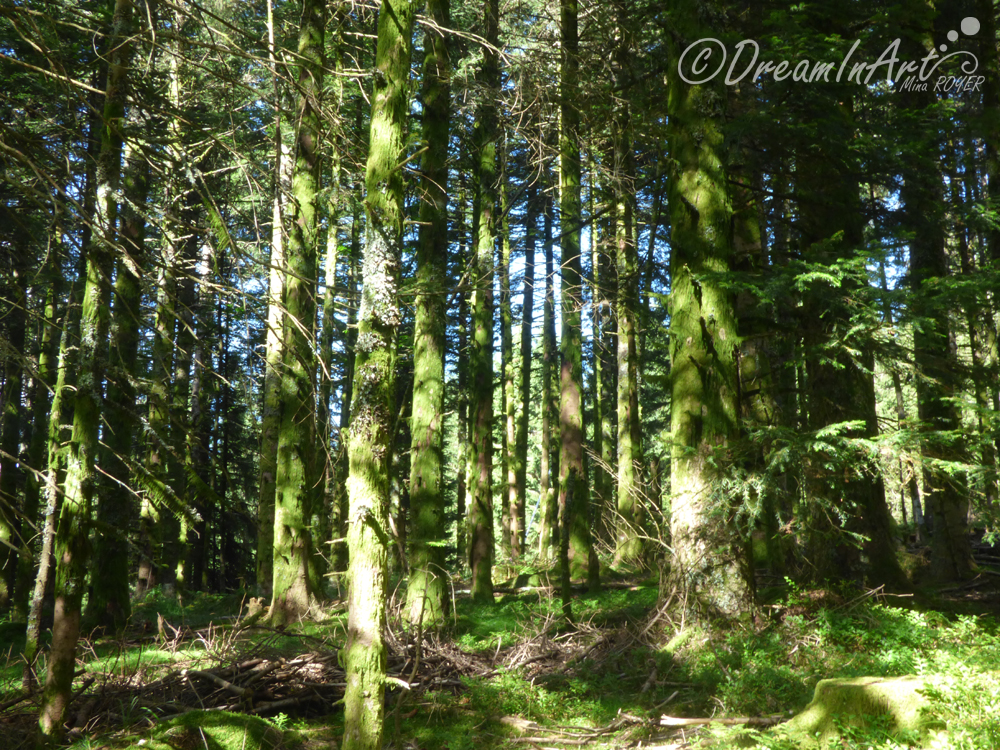 foret-dreaminart-001 copie