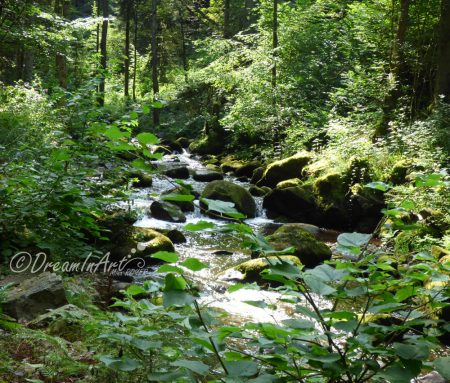 riviere-foret-dreaminart-00